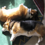 Last day to submit Sleeping Corgis photos is June 17th!