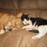 Sleeping Corgis (and a few cats) return on Saturday!