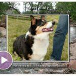 Video Biscuit:  Rudy!