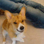 CorgiPals goes 501c3 … GOOD NEWS:  goal reached!!