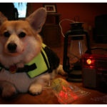 Hurricane Irene:  No match for Bob the Corgi!