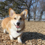 Baxter of Minnesota