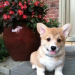 Puppy Cam:  Buddy the Elf!