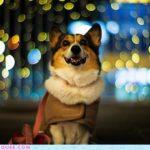 Pochiko :: Big City, Bright Lights!