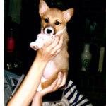Roxy of North Carolina: A Wonderful Life!