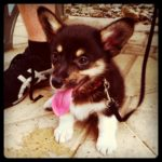 Puppy Cam:  Bosco!
