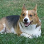Dog on Deck:  Bubba!