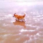 Beach Cam:  Ernie!