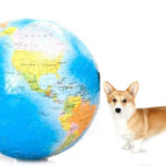 International Corgipants:  True story!