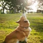 Sweet Baxter's soul has flown …