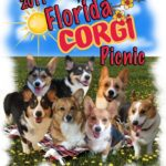 Frappin' Fun in the Sun:  The 2011 Florida Corgi Picnic!