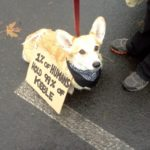 Meet-Up Cam:  Seattle Corgis!
