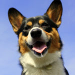 Helping Paws:  Franklin!