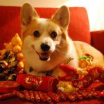 Murray:  Happy Chinese New Year!