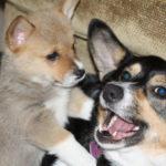Saturday Smilers:  Radar and Callie!
