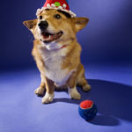 Wanted:  Corgi Wishes for My 46th Birthday!