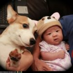 CorgiPals hats hit the BIG TIME!