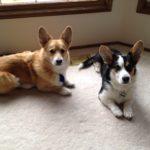 Luca and Raleigh of Washington
