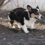 Wednesday Adoptable Update:  Lucky!