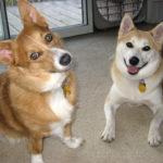 Skylar and Hiro:  Helping little legs!