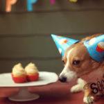 Birthday Cake Hangover Day (and Lola's birthday too)!