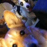 Saturday Smilers:  Gracie and Izzie!
