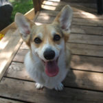 Ronin and Arya of Canada