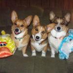 Saturday Smilers:  Brodie, Hudson and Jammer!