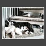Sleeping Corgis Week — Day Three!