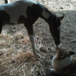 Dillon's First Foal!