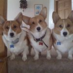Bentley, Bella and Barkley of Illinois