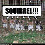 Puppy Cam: SQUIRREL!!!