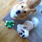 'Cause Ya Gotta Have Friends: Bailey and Benji!