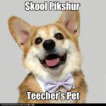 LOL Cam: Teecher's Pet!