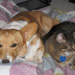 Cats N' Corgis: Angel & Cosmo!
