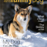 The Daily Corgi Makes the AKC Family Dog Magazine!