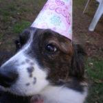 Happy 1st Birthday Gypsy!
