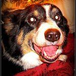 Adoptables Update: Oscar!