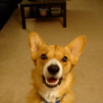 Catching Up with CorgiPals: New Years Resolutions