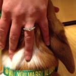 A man, a Corgi, and a marriage proposal!