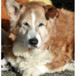Senior Story: Mac and His Last Day In a Shelter …