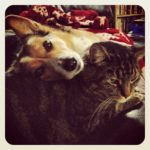 Cats n' Corgis: Maggie and Taz!