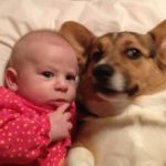Kids n' Corgis: Paisley and Willow!