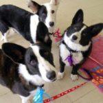 Cardi Cam: Annie, Tannat and Miss Elly!