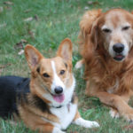 You've Gotta Have Friends: Zoey and Zeus!