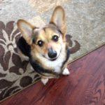 Thursday Adoptable Update: Cody of Kansas!