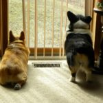 Wednesday Window Watchers!