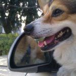 Memories of Max: A Soul Mate Story