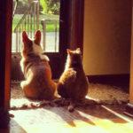 Wednesday Window Watchers