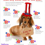 Fireworks and Pet Safety: Don't Lose YOUR Dog!